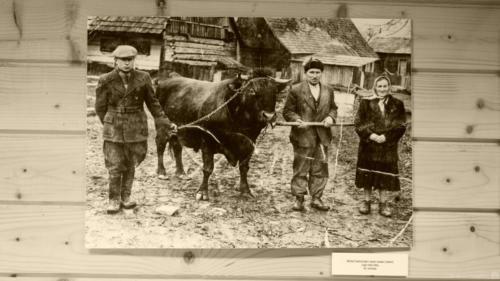 Michał Smereczniak z ojcem Iwanem (Janem) i jego żoną Teklą.